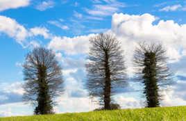Il était une fois 3 arbres