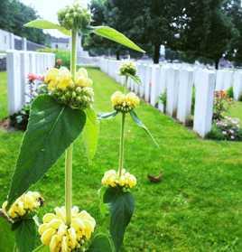 Hilll 70 Mémorial