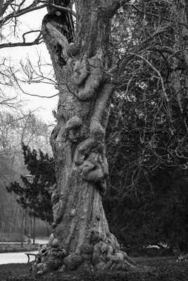 Catalpa commun avec son tronc noueux, plein de vie.
