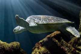 Un monde sous marin