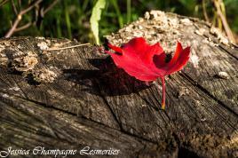Tronc à l'automne