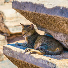 Les chats sont des connaisseurs de confort. De James Herriot
