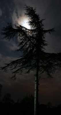 arbre nocturne