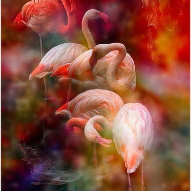 Flamants roses et vapeurs colorées par brightman