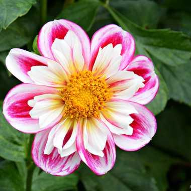 Portrait floral par mamichat