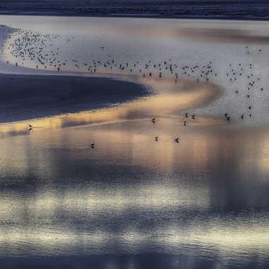 La paix des oiseaux par Jeananne