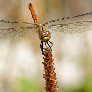 Une p'tite pause pour la pose... par Nikon78