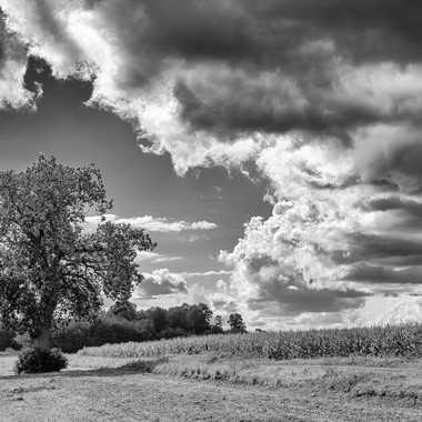 Le Chataigner dans le ciel par JegouG