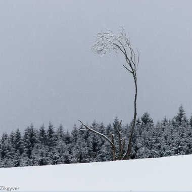 Seul face à l'hiver par Lolo Zikgyver