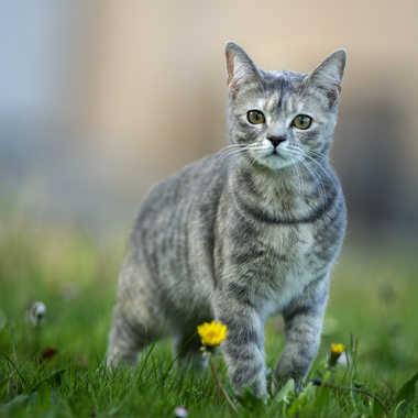 le chat par Regis Parrens