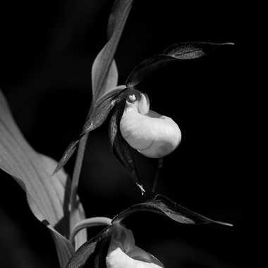 Vénus en noir et blanc par bobox25
