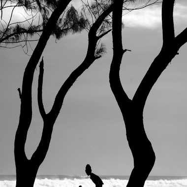 Filaos par Vincent Bernard Lucas