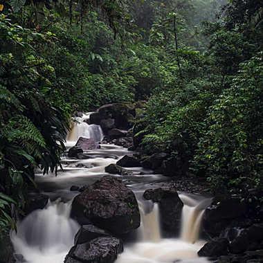 En foret tropicale version couleurs par patrick69220