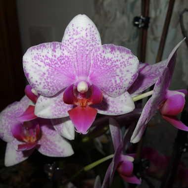 Orchidée par Jerome Rabille