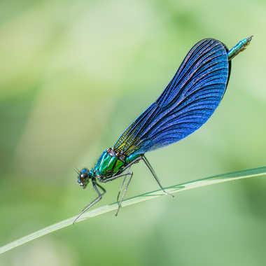 Lady Blue. par Franck06