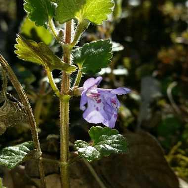 petite fleurs par brj01