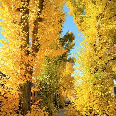 lumière d'automne 2 par bleu