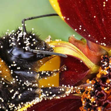 Pluie de pollen par Nikon78