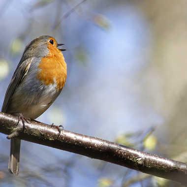 Je chante mais je te surveille ! par Nikon78
