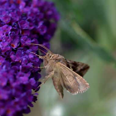 Petit papillon de nuit  par Mary00