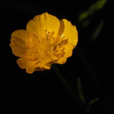 fleur sauva-jaune par olivier_richard_94