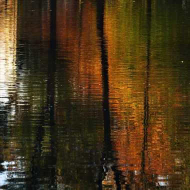Reflets automnale  par Luciephotographie