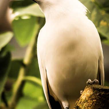 Relookage ornithologique par Philipounien