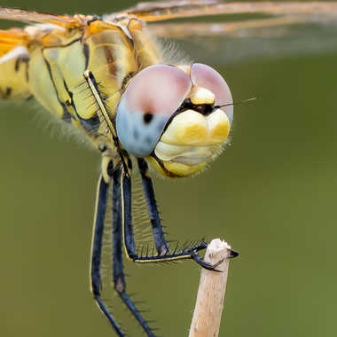 Merveille de la nature par berni6980