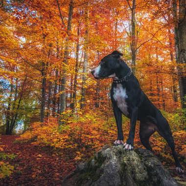 Balade en forêt avec Fiona par Paflapente