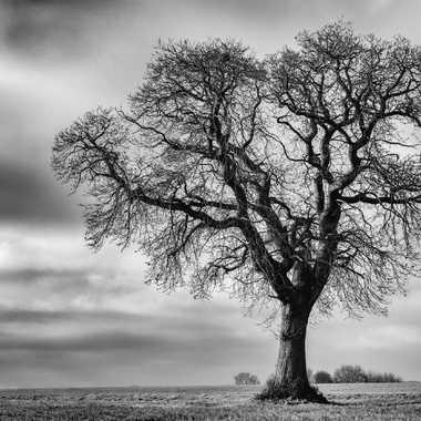 L'arbre tout seul par JegouG
