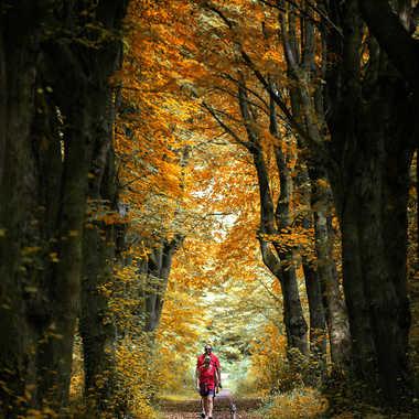 les ptits bonzommes rouges de la forêt par Nimo