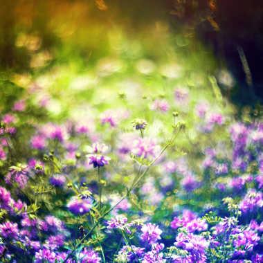 Dites le avec des fleurs par Valérie Tirard