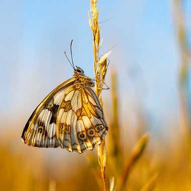 Papillon du soir par Gilles-K