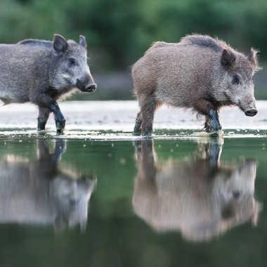 Défilé au bord de l'étang par jeromebouet