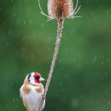 Jour de pluie par jeromebouet
