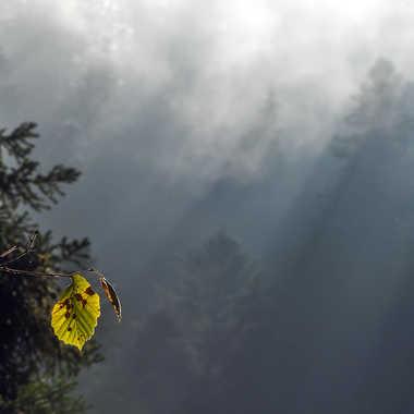 L'appel de la Forêt par Valérie Tirard