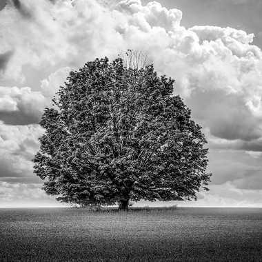 L'arbre par thierry_2090