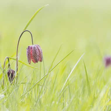 Fleurs des champs par patrick69220