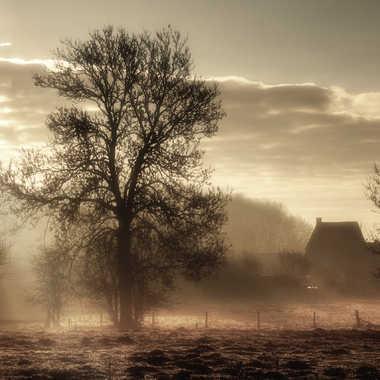 soleil du matin par nikki