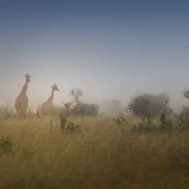 Savane africaine par patrick69220