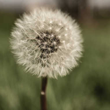 Sphere par Buissem
