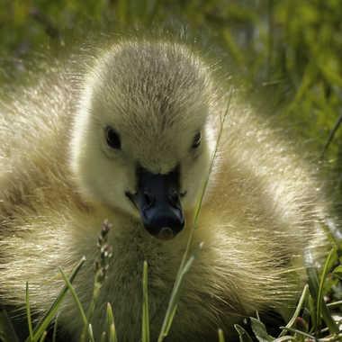 Tweety Bird taw a puddy tat... par ChristianF