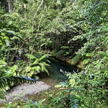 Exuberance tropicale par rmgelpi