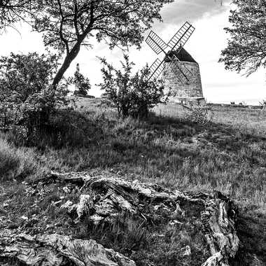 La souche & Le moulin par FredoRoiDuVelo