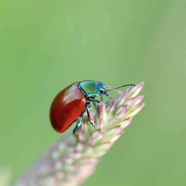Insecte de mon jardin par Philippe-33430