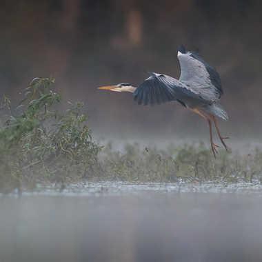 Dans la brume du matin par jeromebouet