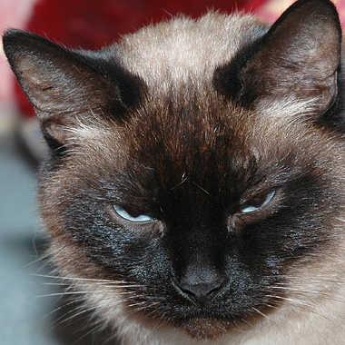 Ma petite  Belette par lynx