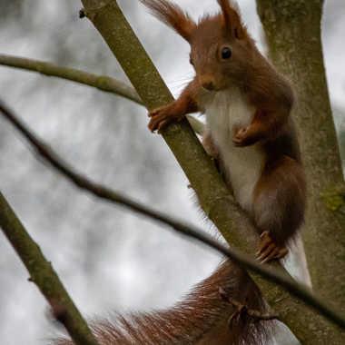 Ecureuil dans le vent par Theseb10000