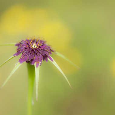 fleur  de campagne par genevieve_3824