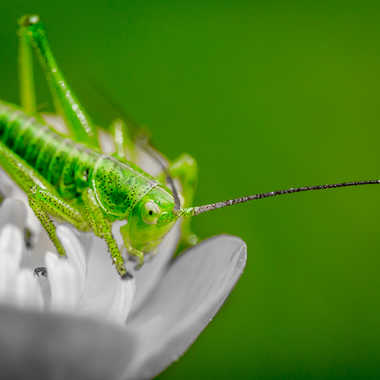Jiminy par Franck06